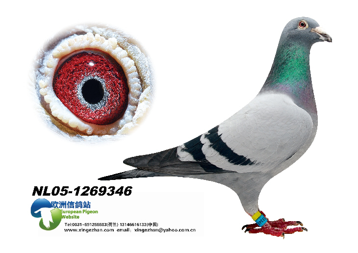 NL05-1269346