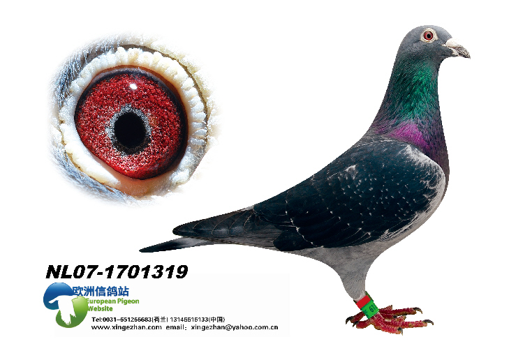 NL07-1701319